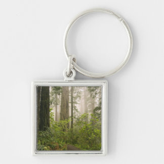 Rhododendron blooming among the Coast Redwoods / Silver-Colored Square Keychain