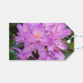 Rhododendron Flower Gift Tags Pack Of Gift Tags