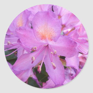 Rhododendron Flower Stickers