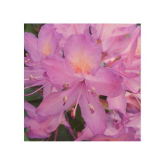 Rhododendron Flower Wood Wall Art