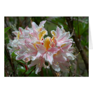 Rhododendron Occidentale Card