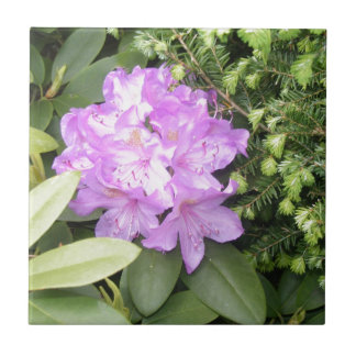 Rhododendron - Purple Flowers in Spring Tile