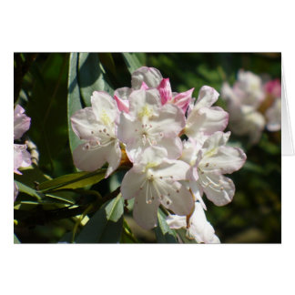 Rhododendrons 172 card