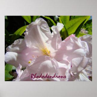 Rhododendrons art prints Pink Rhodies Floral