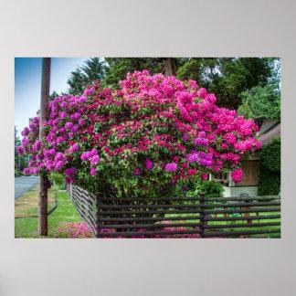 Rhododendrons embrassant le téléphone Polonais