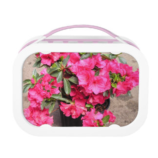 Rhododendrons Lunch Box