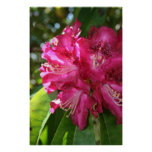 Rhododendrons Print