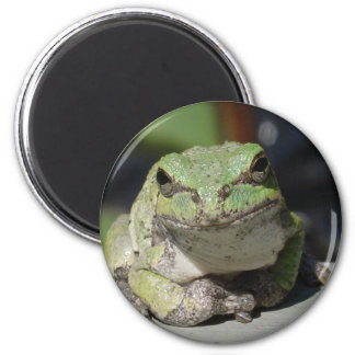 ribbit magnet
