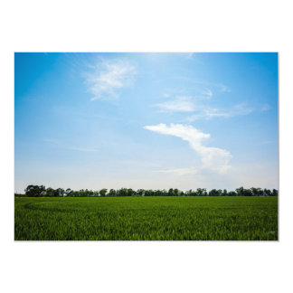 Rice field in summer on a sunny day card