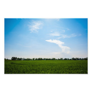 Rice field in summer on a sunny day photo print