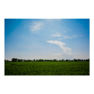 Rice field in summer on a sunny day poster