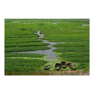 rice fields in cambodia poster