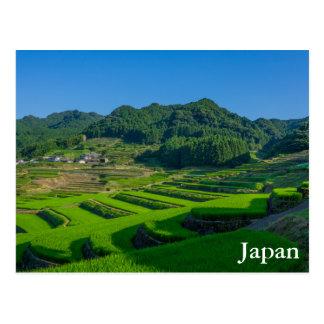 Rice Paddy Field in Japan Postcard