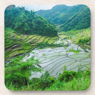 Rice terrace landscape, Philippines Coaster