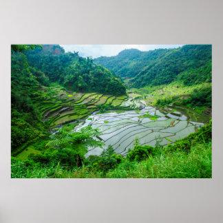 Rice terrace landscape, Philippines Poster