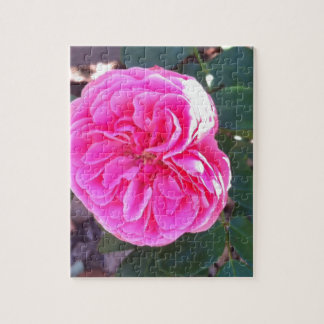 Rich Pink Rose Jigsaw Puzzle