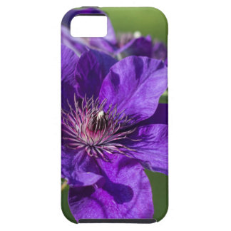 Rich Purple Clematis Blossom Macro iPhone 5 Cases