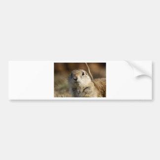Richardsons Ground Squirrel, aka, Prairie Gopher Bumper Sticker