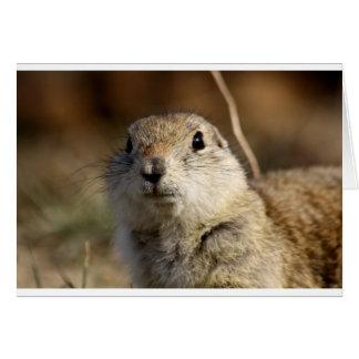 Richardsons Ground Squirrel, aka, Prairie Gopher Card