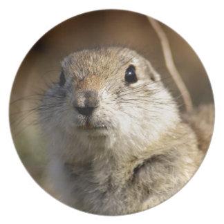 Richardsons Ground Squirrel, aka, Prairie Gopher Dinner Plates