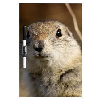 Richardsons Ground Squirrel, aka, Prairie Gopher Dry Erase Board