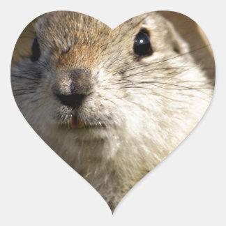 Richardsons Ground Squirrel, aka, Prairie Gopher Heart Sticker