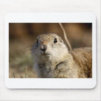 Richardsons Ground Squirrel, aka, Prairie Gopher Mouse Pad