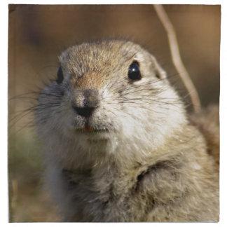 Richardsons Ground Squirrel, aka, Prairie Gopher Napkin