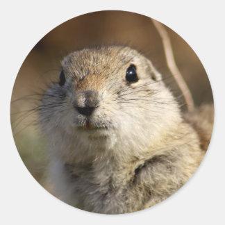 Richardsons Ground Squirrel, aka, Prairie Gopher Round Sticker