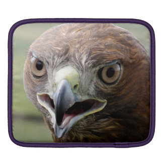 Rickshaw Sleeve iPad with Red Tailed Hawk