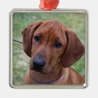 Ridgeback Puppy Metal Ornament