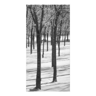 Rime in the Trees Black and White Print Photo Card