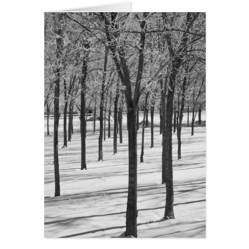 Rime in the Trees Winter Notecard Cards