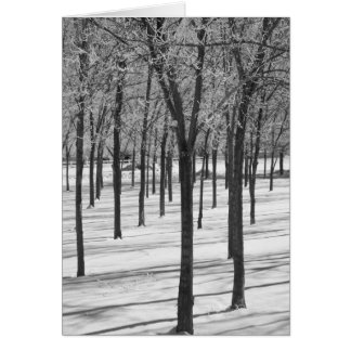 Rime in the Trees Winter Notecard Note Card