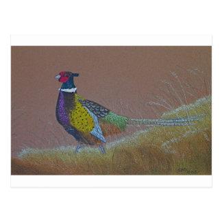 Ring Neck Pheasant Wild Bird Postcard