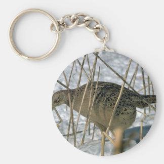 Ring-necked hen pheasant key chain