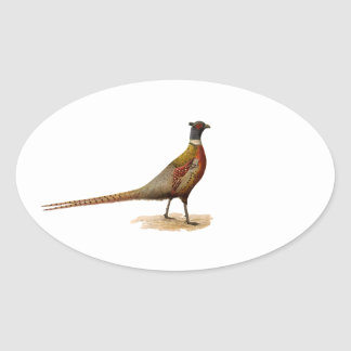 Ring-necked Pheasant Oval Sticker