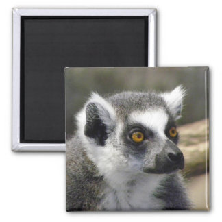 Ring-Tailed Lemur Close Up Portrait Magnet