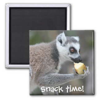 Ring-Tailed Lemur -- Snack Time! Square Magnet