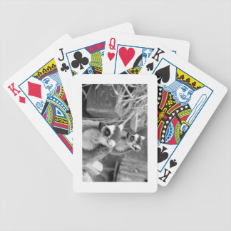 Ring-tailed lemur with baby black and white bicycle playing cards