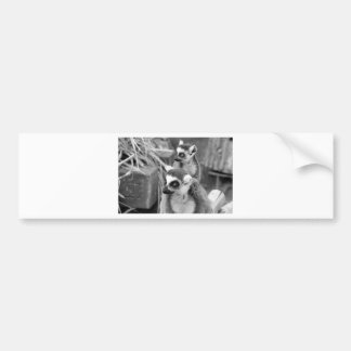 Ring-tailed lemur with baby black and white bumper sticker