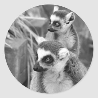Ring-tailed lemur with baby black and white classic round sticker