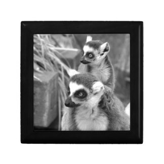 Ring-tailed lemur with baby black and white gift box