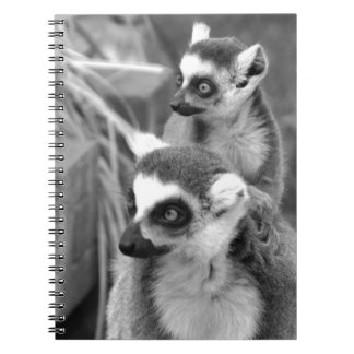 Ring-tailed lemur with baby black and white note book
