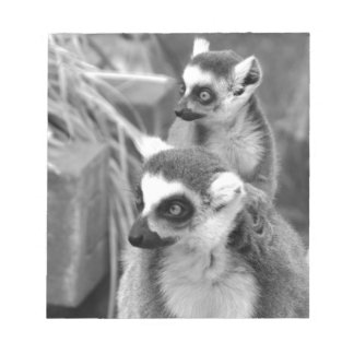 Ring-tailed lemur with baby black and white notepad