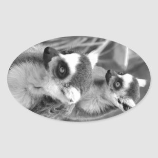 Ring-tailed lemur with baby black and white oval sticker
