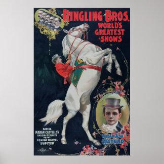 Ringling Bros 1899 White Horse Circus Poster