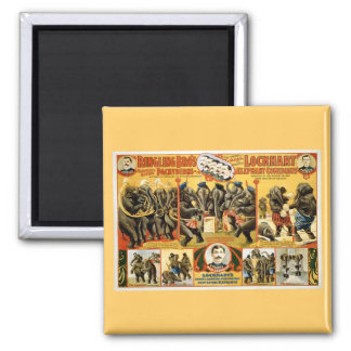 Ringling Bros Pachyderms1899 Square Magnet