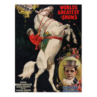 Ringling Brothers Horses Postcard
