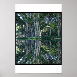 Ringling Museum Banyan Trees Poster